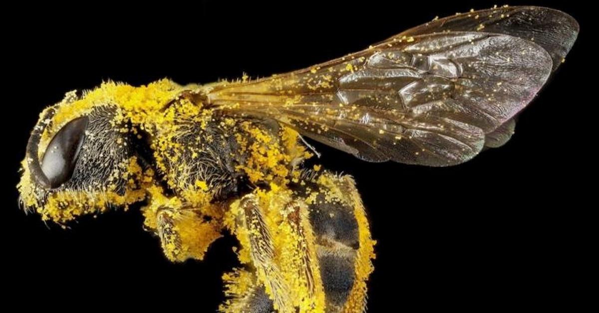 ¿Qué papel juegan las abejas en la polinización?
