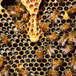 Proyecto de Ley para la defensa de polinizadores, fomento de la cría de abejas y desarrollo de la apicultura en Colombia